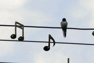 birds-2672101_1920